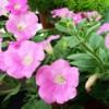 Vườn hoa nhà mềnh